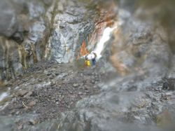 Canyon 2015 BRAS ROUGE MéDIAN